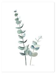 Producten getagd met botanisch