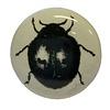 La Finesse kastknopje wit met zwarte kever