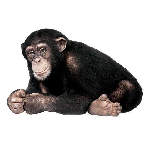 KEK Amsterdam muursticker aap chimpansee