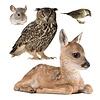 KEK Amsterdam muursticker dieren forest friends