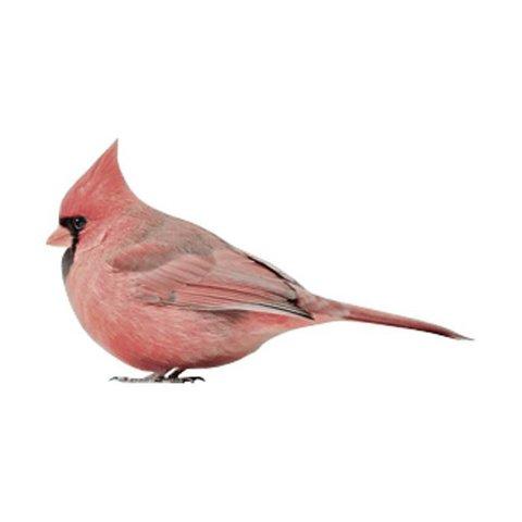KEK Amsterdam muursticker vogel Cardinal