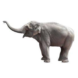 KEK Amsterdam KEK Amsterdam muursticker olifant