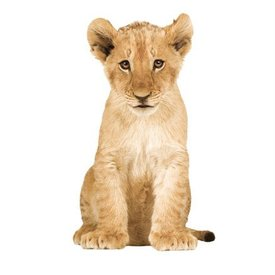 KEK Amsterdam KEK Amsterdam muursticker baby leeuw