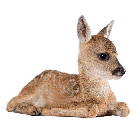 KEK Amsterdam muursticker bambi