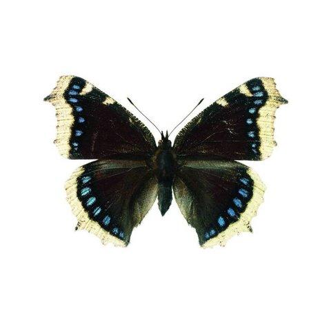 KEK Amsterdam muursticker vlinder grijs blauw