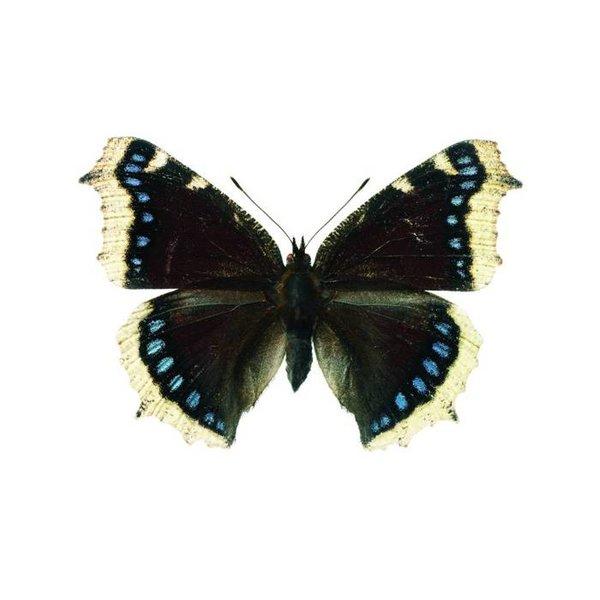 KEK Amsterdam KEK Amsterdam muursticker vlinder grijs blauw
