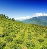 Shangri-La - organische witte thee van hoge kwaliteit