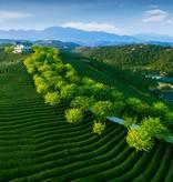 Emerald Green - handgeplukt en gerolde thee