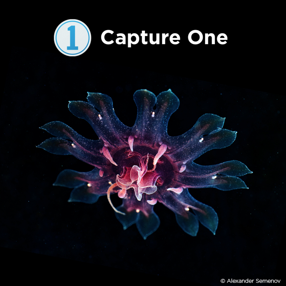 Phase One Capture One Pro 20 for Sony Cameras