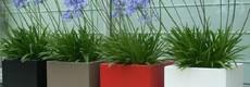 Plantenbakken