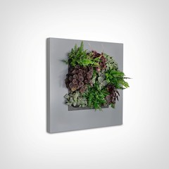 Mobilane LivePicture 1,  levend planten schilderij