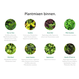 LivePicture 1,  levend planten schilderij