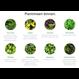 LivePicture GO rood,  levend planten schilderij op=op