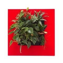 Mobilane LivePicture GO rood,  levend planten schilderij