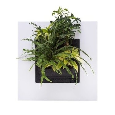 Mobilane LivePicture GO wit, levend planten schilderij