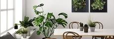 LivePicture, het levende planten schilderij