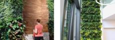 LivePanel PACK, een duurzame plantenwand