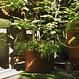 Cortenstaal plantenbak Atlas  60x60cm.