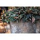 Ficonstone plantenbak Jesslyn 42x36cm.