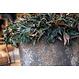 Ficonstone plantenbak Jesslyn 70x61cm.