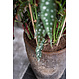 Ficonstone plantenbak Dax 36x80cm.