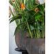 Ficonstone plantenbak Maraa 45x66cm.