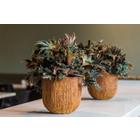 Ficonstone plantenbakken