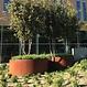 Cortenstaal plantenbak Atlas zonder bodem 100x40cm.