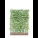 Kant en klaar haag Carpinus Betulus Haagbeuk 120x155cm.