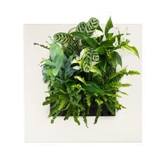 LivePicture GO Bamboo naturel,  levend planten schilderij