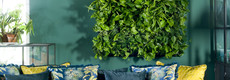 Groene wanden en schilderijen