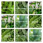 Plantmixen