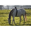 Premium | Foaling Alarms | Electric Fence Online