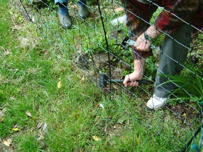Electric Poultry Netting is Easy to Set Up | Electric Fence
