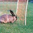 Gallagher Rabbit-/Hobby net - orange, single pin (50m)