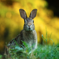 Electric Fencing for Rabbits