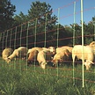 Gallagher Combo sheep and goat netting - Orange, single pin, 50m