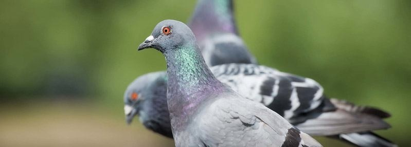Bird Scarers FAQs