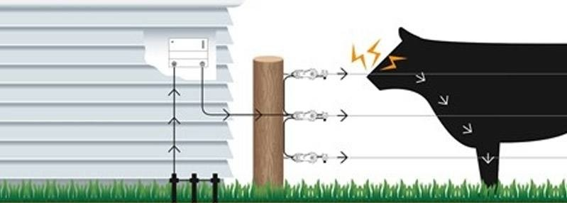 How does an electric fence work? A guide from Electric Fence Online