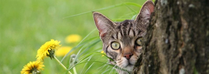 How to stop cats pooping in your garden and protect your flowerbeds