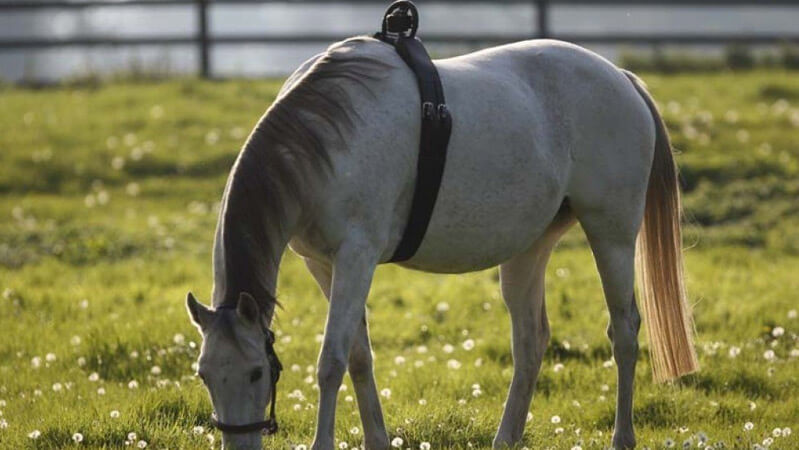 'Birth Alarm' the system that alerts you on time of the birth of the foal