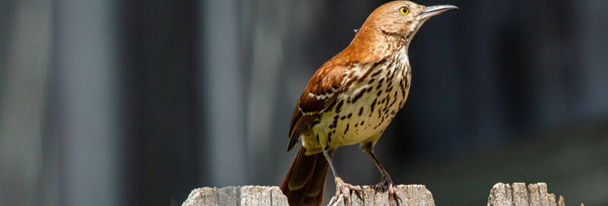 Safely detter birds with  Bird Scarers