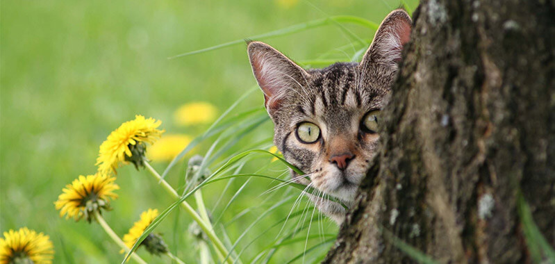 Keep your garden contained – How to keep cats out of your garden