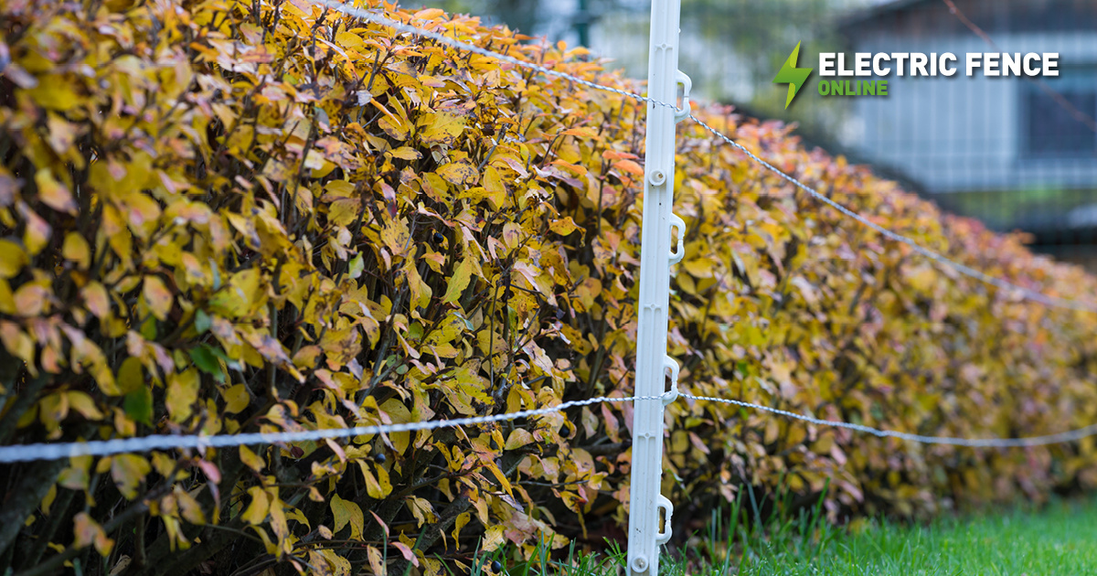 Is your fence Autumn ready?