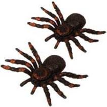 Spinnen - 2 op kaart