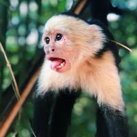Tschö Monkey Mind – Tipps gegen Grübeln