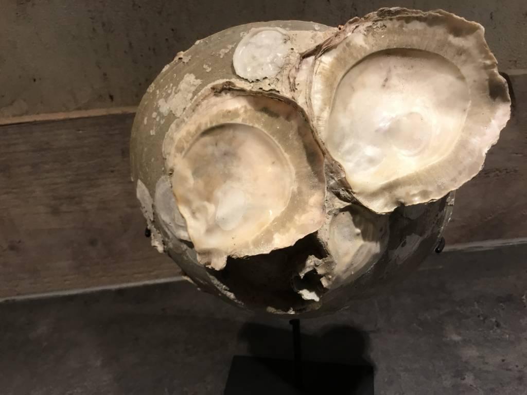 Kommetje met schelpen van zeebodem