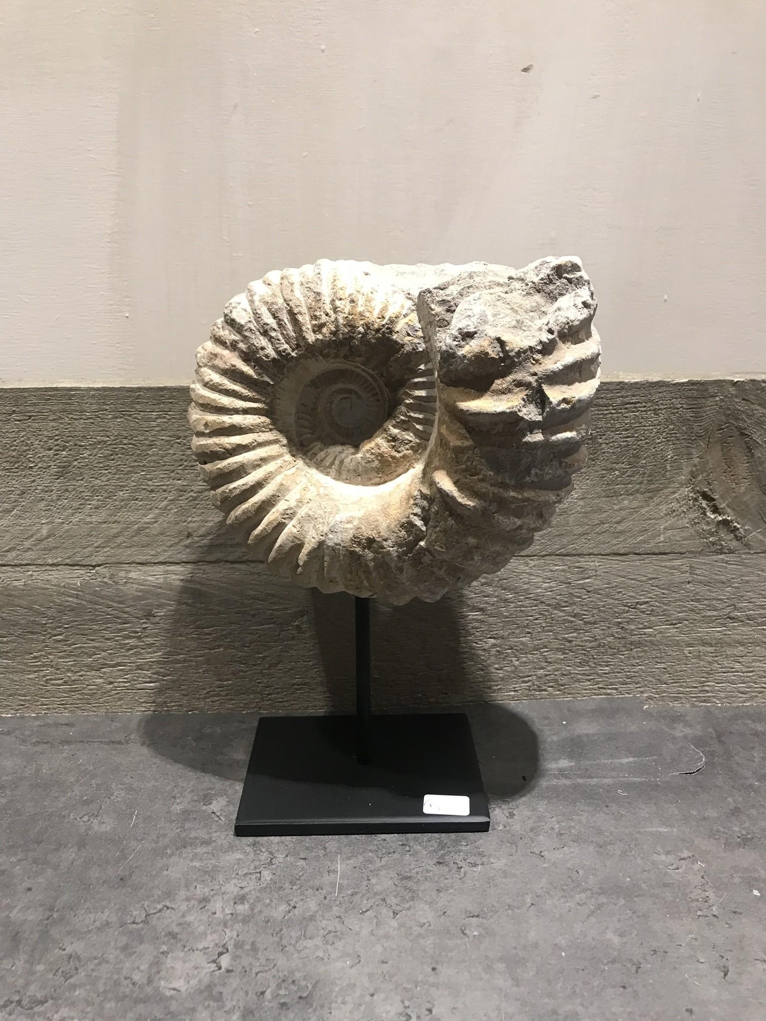 Fossiel op standaard