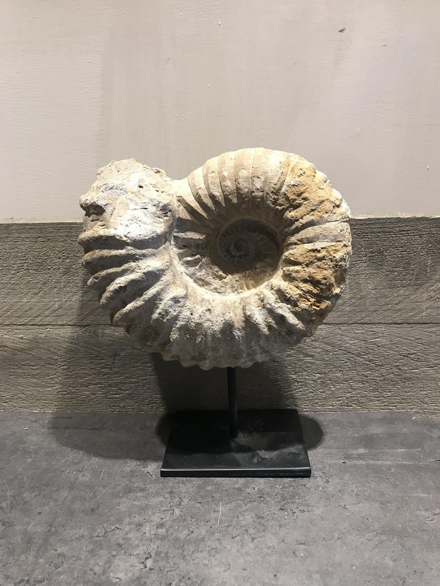 Tv Kast Fossiel.Fossiel Op Standaard De Appelgaard