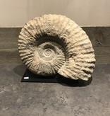 Fossiel op standaard groot